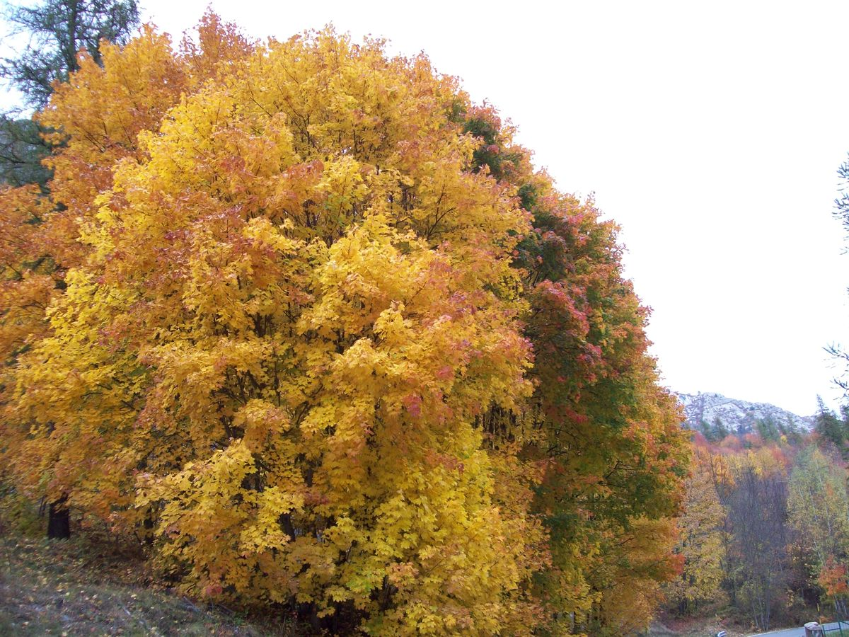 Il_Foliage_in_Valle_Maira_-_1.jpg