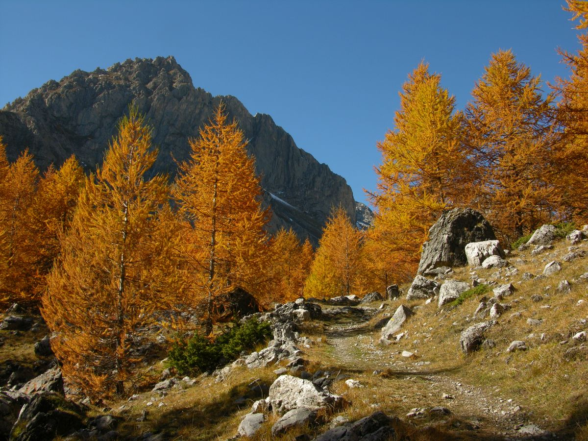 Il_Foliage_in_Valle_Maira_-_5.jpg