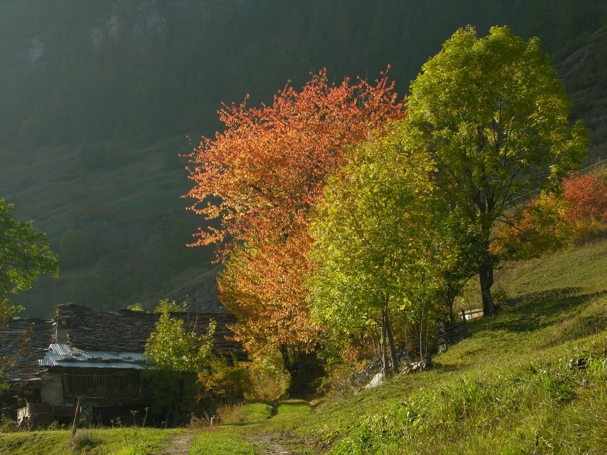 Il_Foliage_in_Valle_Maira_-_6.jpg