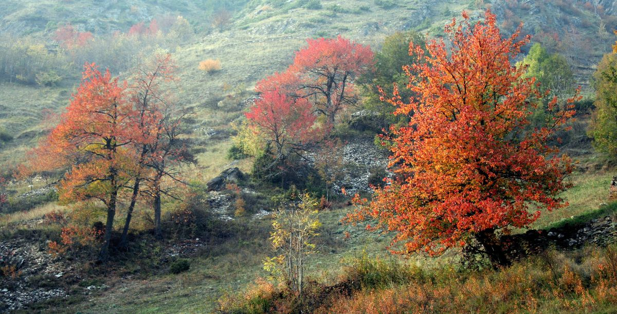 Il_Foliage_in_Valle_Maira_-_9.jpg